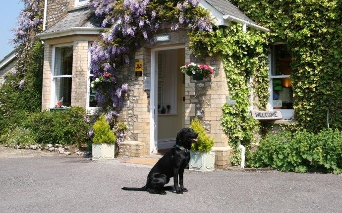 Top 15 Dog Friendly Hotels In Devon Uk