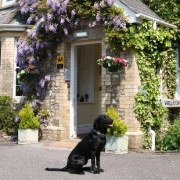 Best Dog Friendly Hotels In Devon